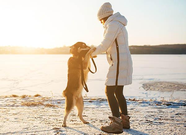 Hayvanların duygusal yükümlülüğü